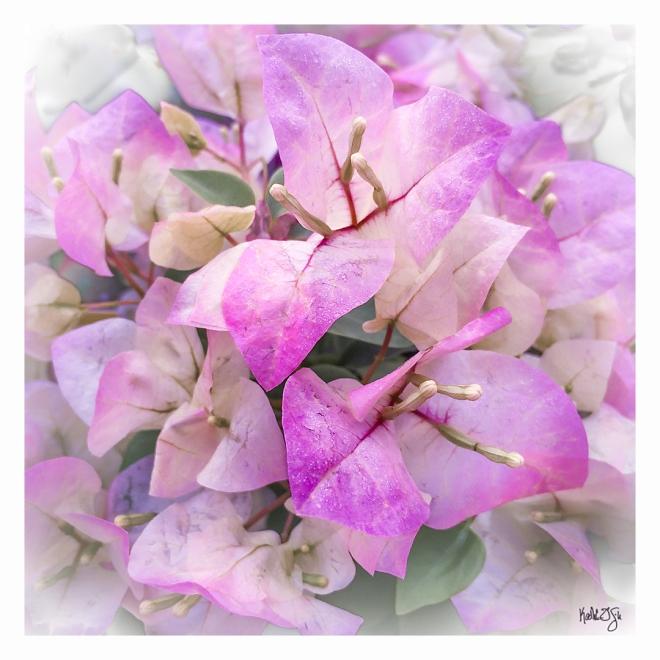150327-flowers-019