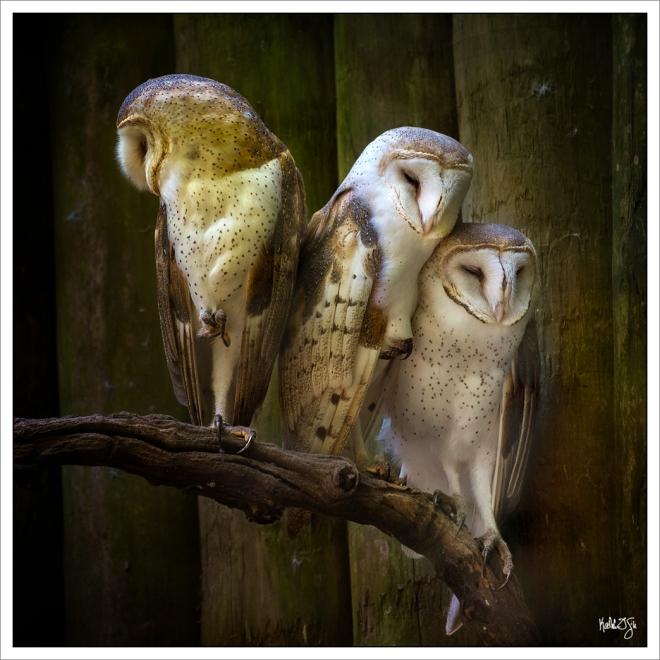 150403-wildlifepark-153