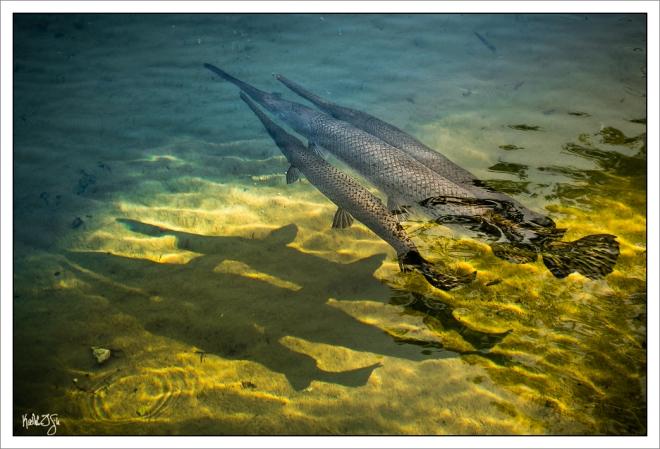 150403-wildlifepark-093