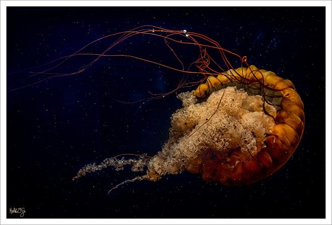 150815-aquarium-066