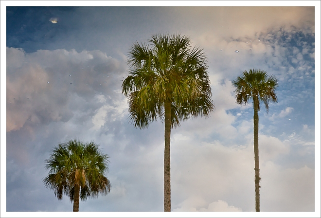 120413_Plantation_0008_palms